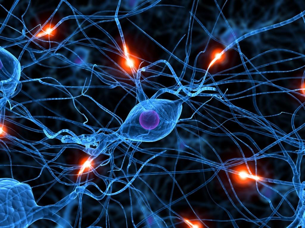Neuroplasticity (src:goconqr)